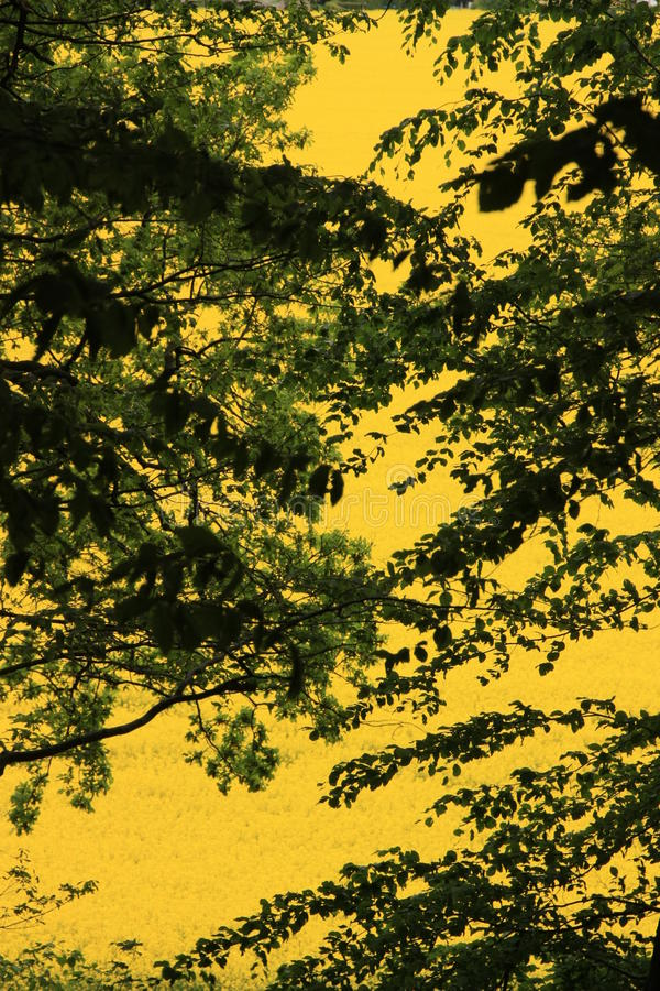 Gele kleurenflits royalty-vrije stock afbeeldingen