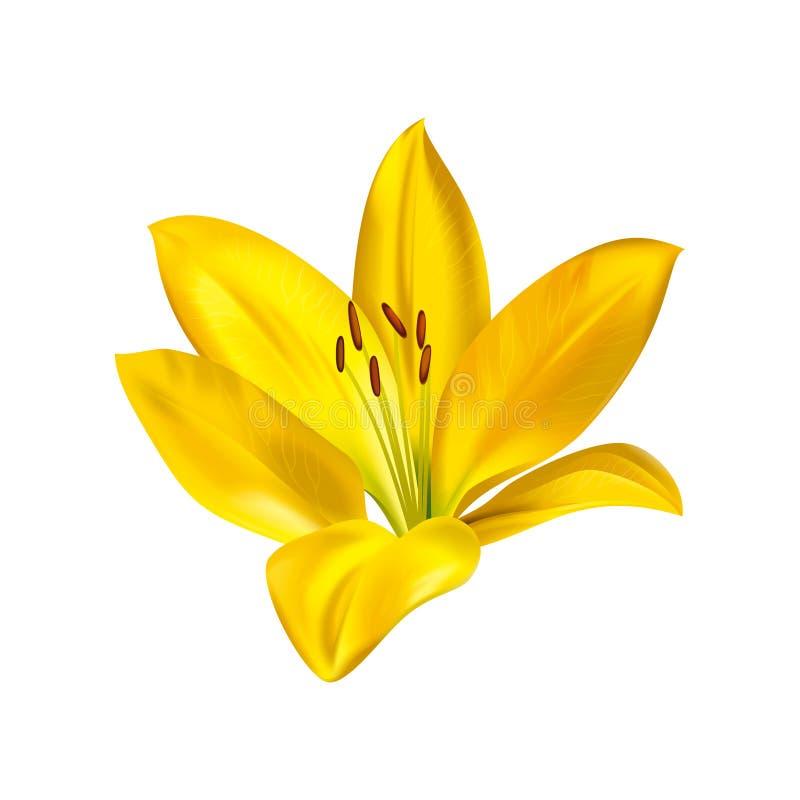Gele leliebloem vector illustratie