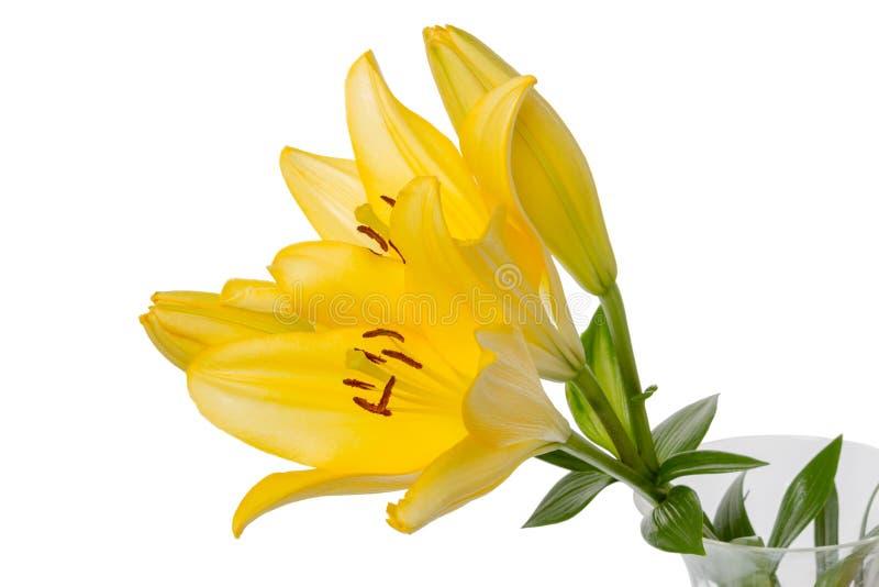 Gele lelies op wit stock afbeelding