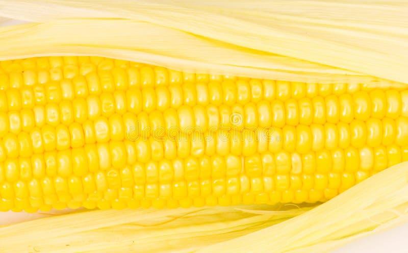 Gele maïskolven royalty-vrije stock foto