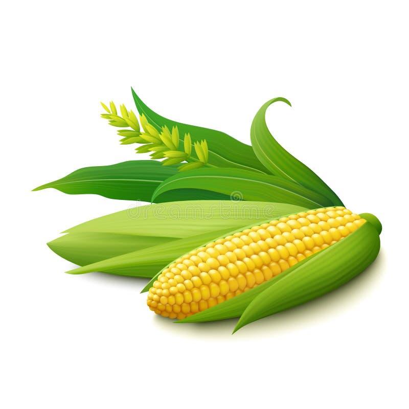 Gele maïskolven op witte achtergrond stock illustratie