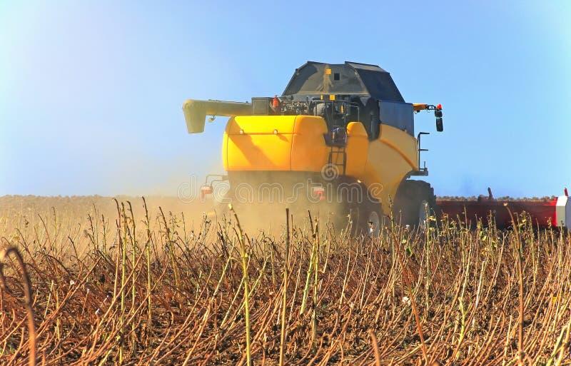 Gele maaimachine die aan een tarwegebied werken Agronomie, het concept stock afbeelding