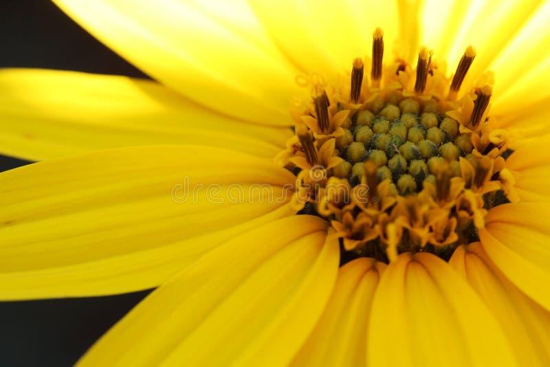 gele macrobloemen royalty-vrije stock foto