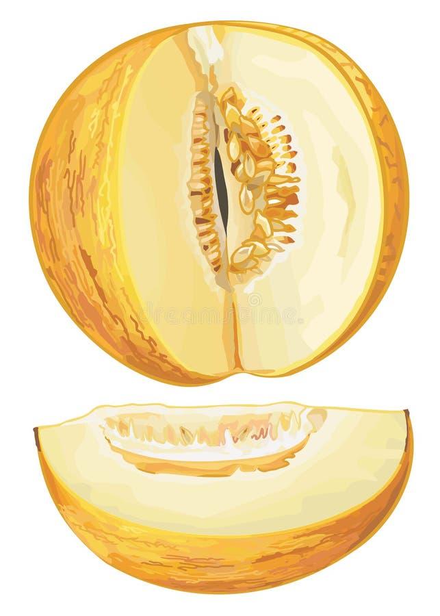 Gele meloen royalty-vrije illustratie