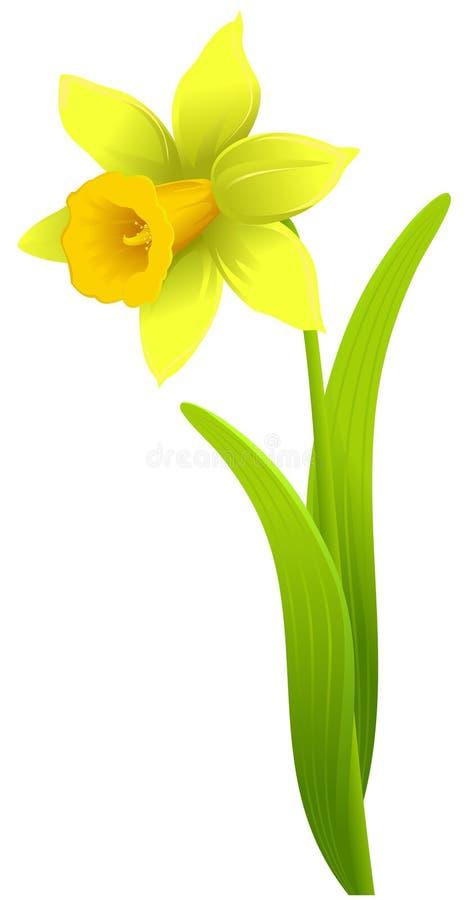 Gele narcis stock illustratie