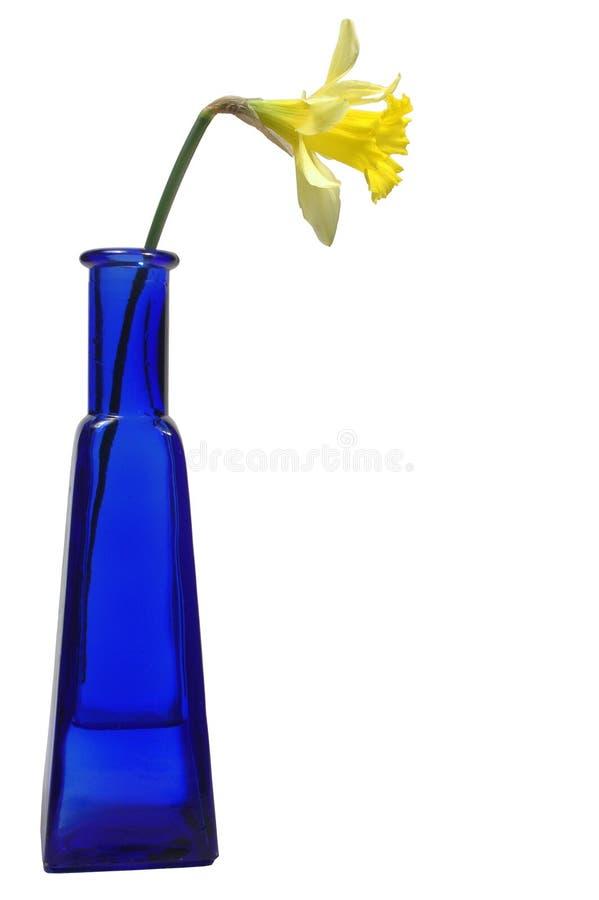 Gele narcis in blauwe fles stock foto
