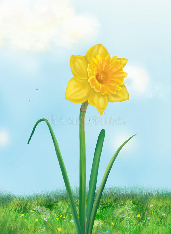 Gele narcis Gele bloem royalty-vrije illustratie