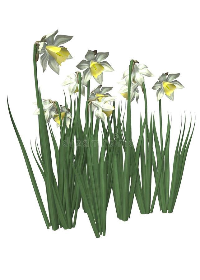 Gele narcissen stock illustratie