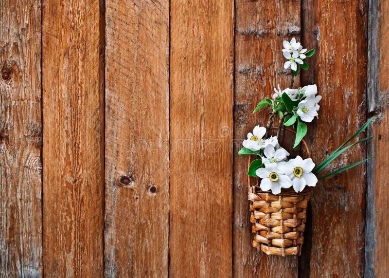 Gele narcissen en de tot bloei komende tak van de appelboom in een mand stock foto