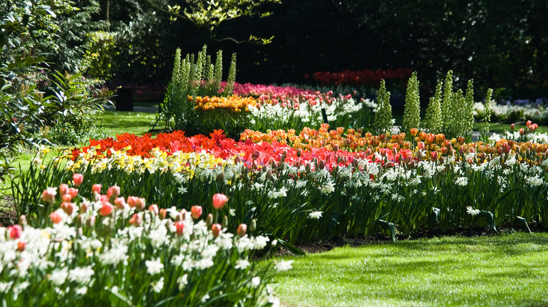Gele narcissen en tulpen in de lente stock afbeeldingen