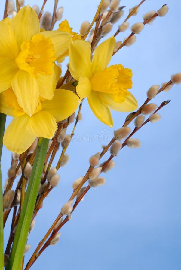 Gele narcissen op Blauw royalty-vrije stock afbeelding