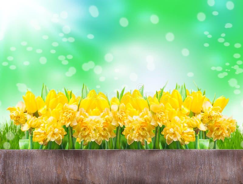 Gele narcissen, tulpen, bokeh stock fotografie