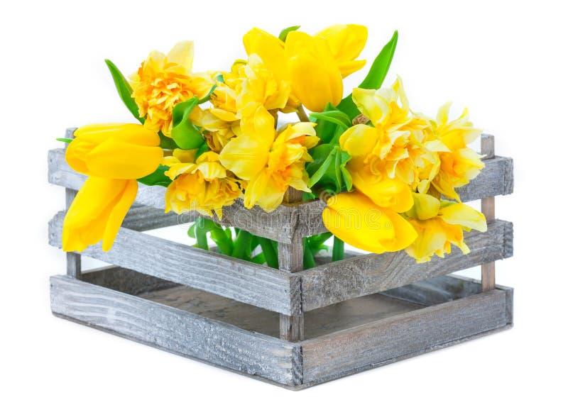 Gele narcissen, tulpen in houten doos stock afbeeldingen