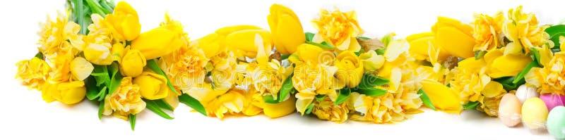 Gele narcissen, tulpen, paaseieren, banner stock foto's