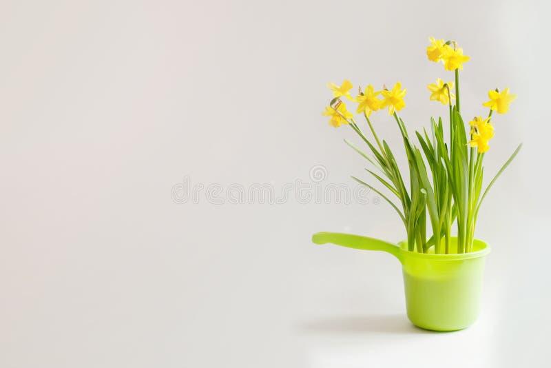 Gele narcissuses in heldergroene bailer stock foto's