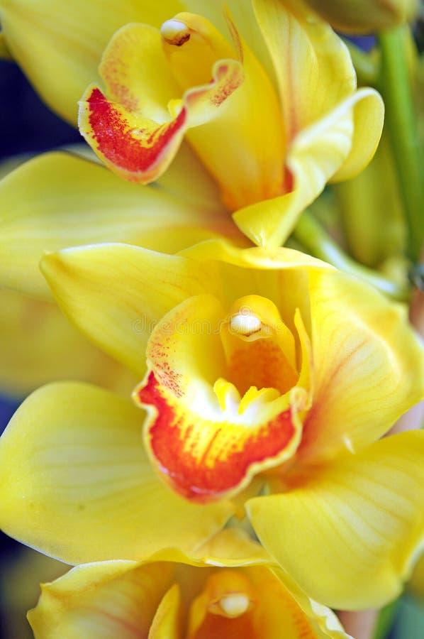 Download Gele orchideebloem stock afbeelding. Afbeelding bestaande uit tuin - 29511335