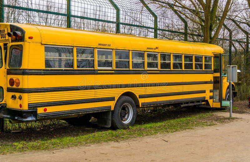 Gele oude uitstekende schoolbus, Retro voertuigen, Vervoer voor de jonge geitjes aan school stock fotografie