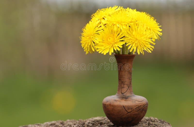 Gele paardebloemen stock foto's