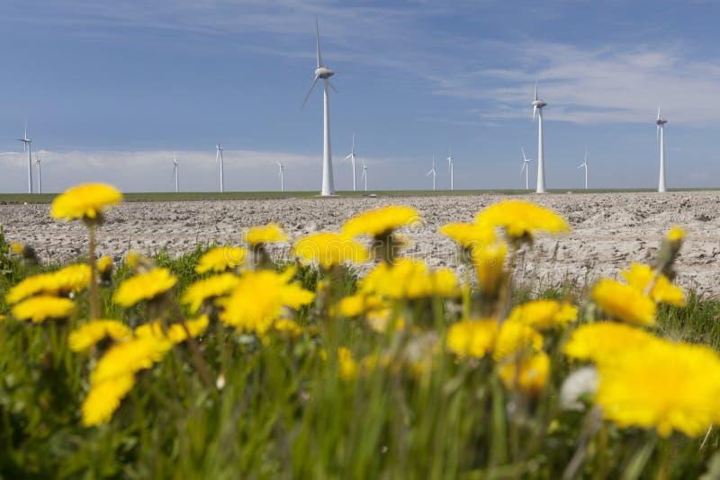 Gele paardebloemen in de voorgrond en windturbines tegen bl stock fotografie