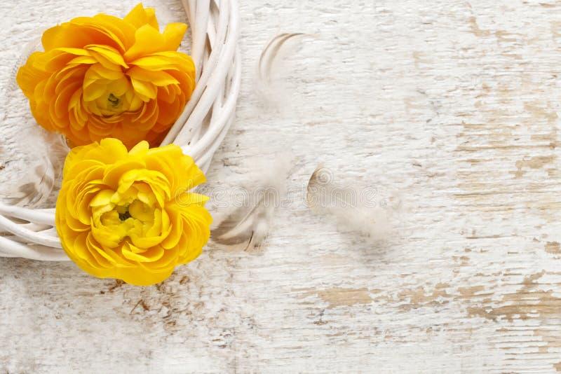 Gele Perzische boterbloemenbloemen (ranunculus) op houten backgrou royalty-vrije stock fotografie