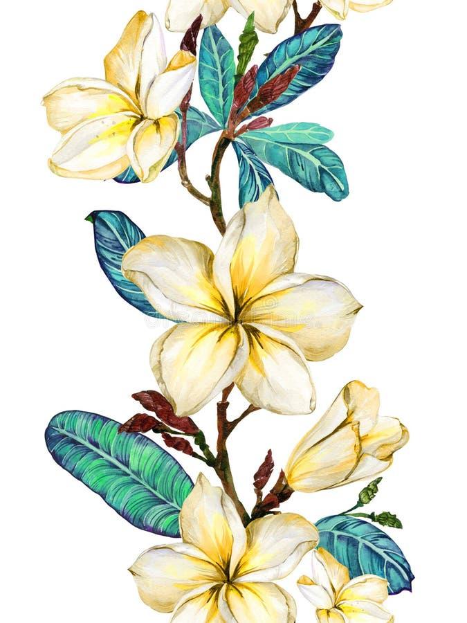 Gele plumeriabloem op een takje Grensillustratie Naadloos BloemenPatroon Geïsoleerdj op witte achtergrond Het Schilderen van de w stock illustratie