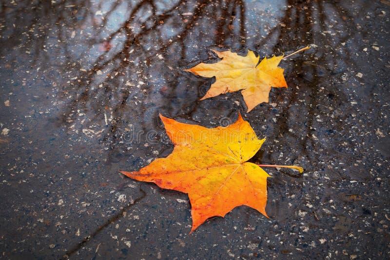 Gele, rode de herfstbladeren royalty-vrije stock fotografie