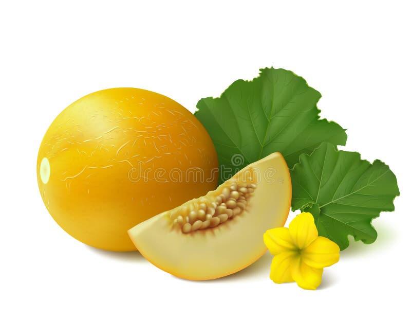Gele ronde meloen op witte achtergrond stock illustratie