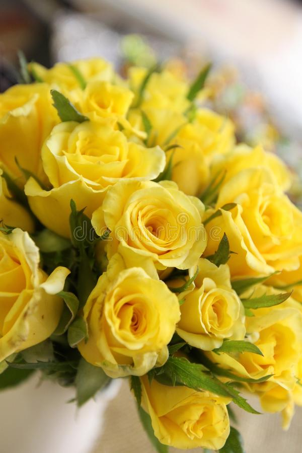 Gele rozen stock foto's
