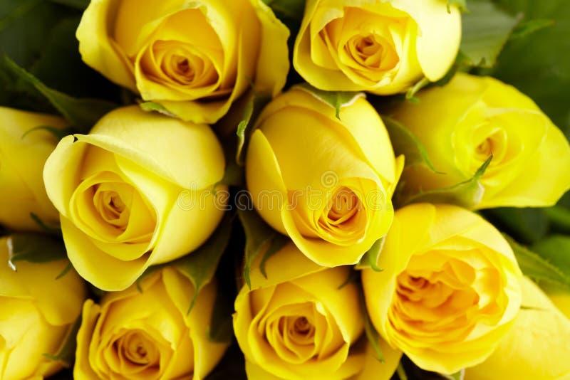 Gele rozen in het detail royalty-vrije stock afbeelding