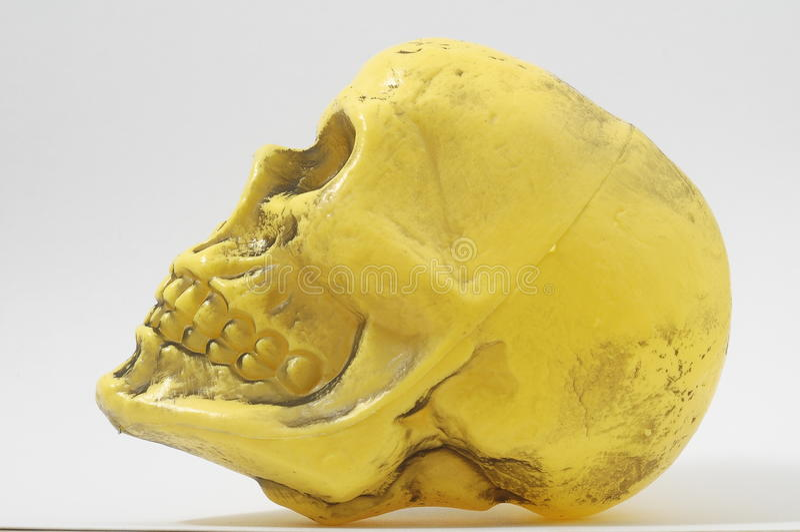Gele Schedel stock afbeelding