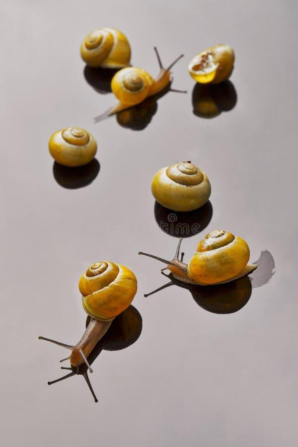 Gele slakken die op lichte achtergrond stellen stock afbeeldingen