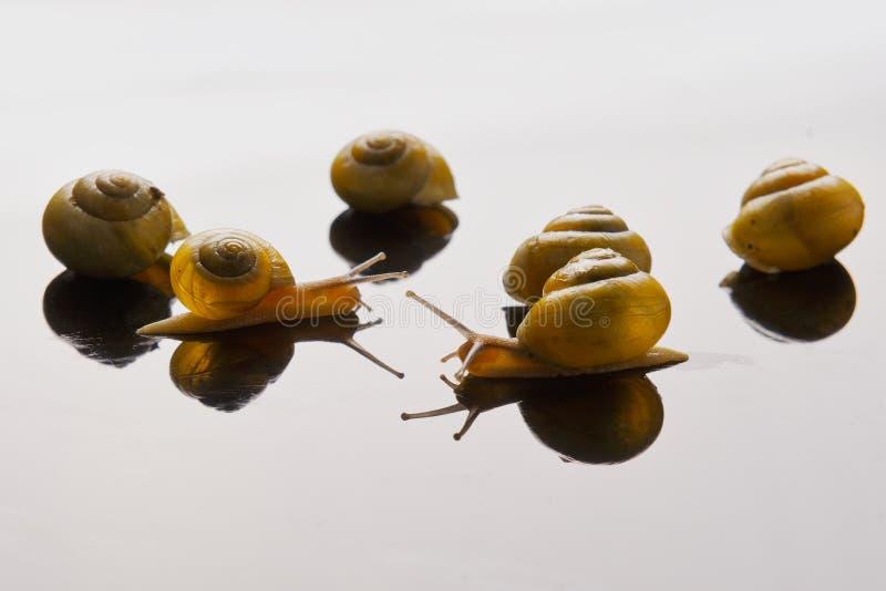 Gele slakken die op lichte achtergrond stellen stock foto's