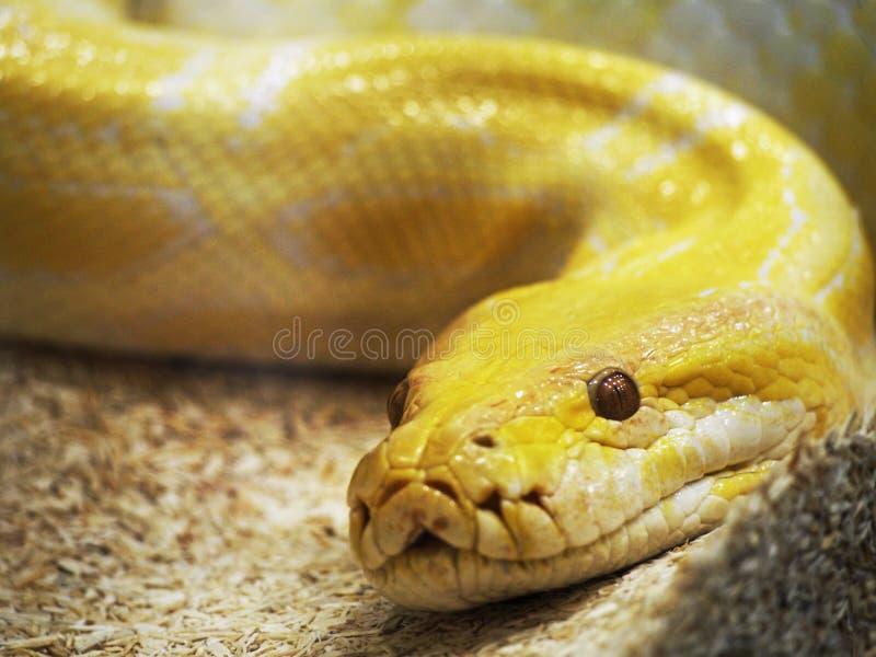 Slang Yellow Cake