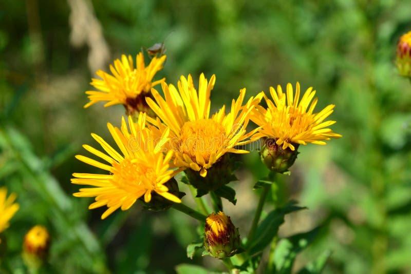 Gele steppebloemen stock foto