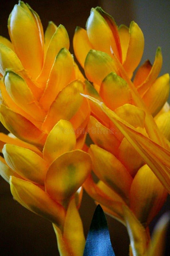 Gele Tropische Bloemen in Bloei royalty-vrije stock foto