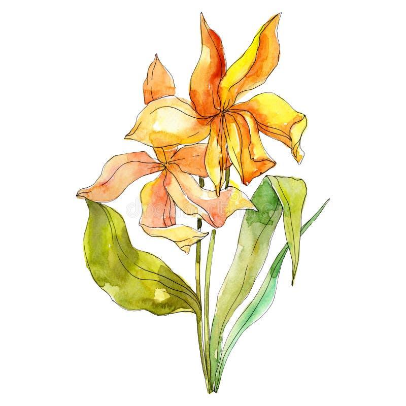 Gele tulipt bloemen botanische bloemen Waterverf achtergrondillustratiereeks Het geïsoleerde element van de boeketillustratie royalty-vrije illustratie
