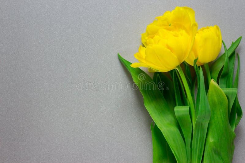 Gele tulpen op een grijze achtergrond met copyspace Gele bloemen royalty-vrije stock foto's