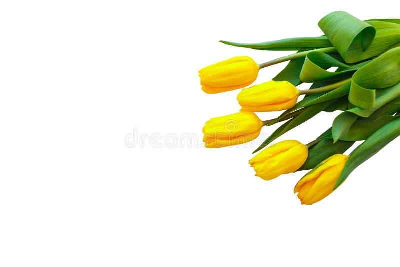 Gele tulpen op een witte achtergrond De bloemen liggen op het hoogste recht stock afbeelding