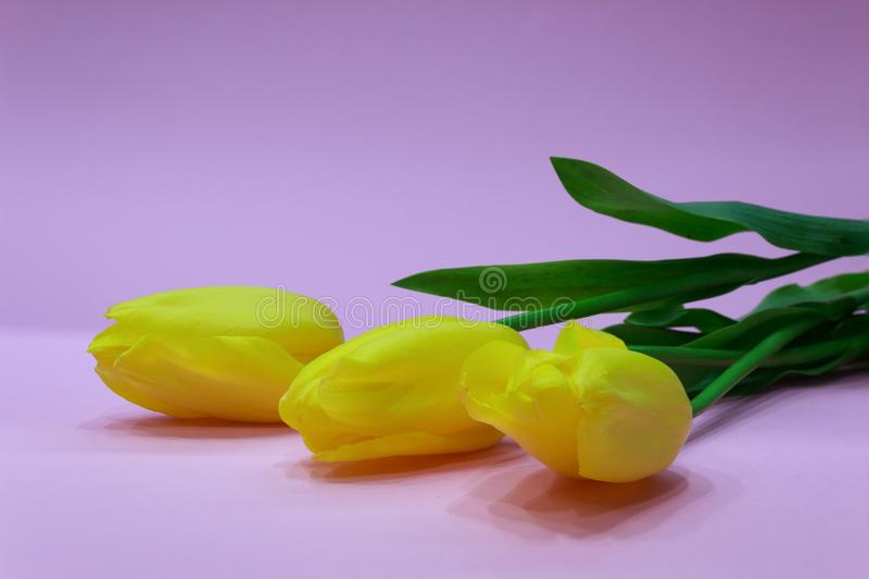 Gele tulpen op roze achtergrond royalty-vrije stock foto