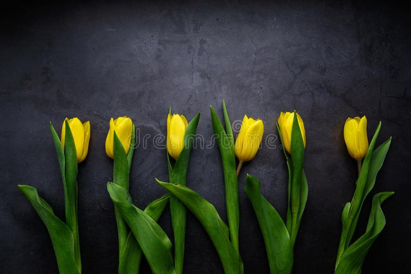 Gele tulpenbloemen op donkere achtergrond Het wachten op de lente Gelukkige Pasen-kaart, de dag van vrouwen, de dag van de moeder royalty-vrije stock foto's