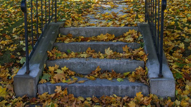 Gele van de dalingshalloween van de foilageherfst het seizoenbladeren in een ina openbaar park van het tredegeval stps in het sei stock foto