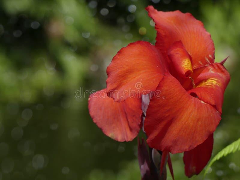Gele van het de aardblad van de bloemtuin van de de takkeninstallatie de biologische wetenschaplandbouw stock afbeelding