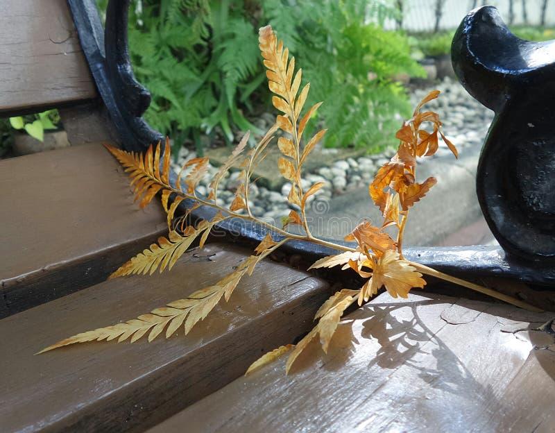 Gele varenbladeren op tuinstoel stock foto's