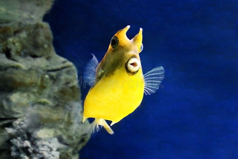 Gele vissen in de oceaan stock foto's