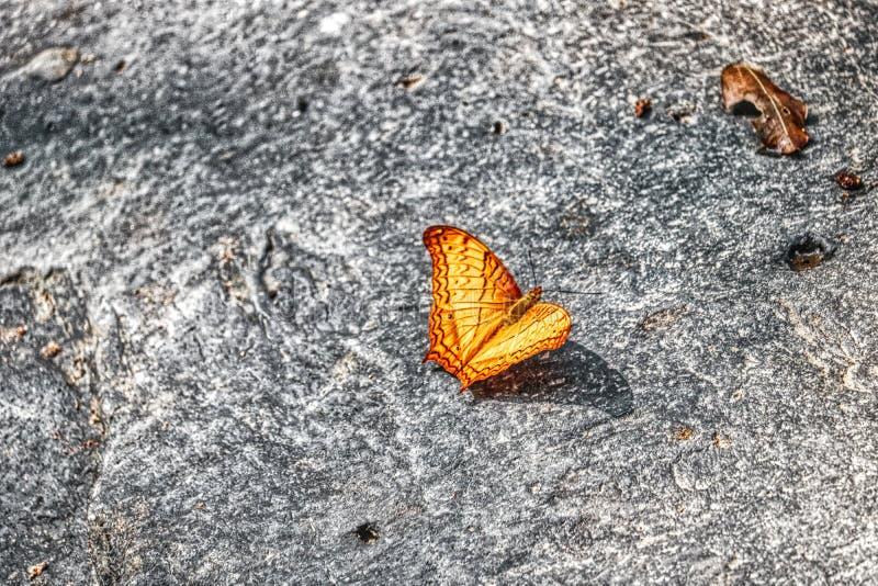 Gele vlinder in de wildernis van Thailand stock afbeelding
