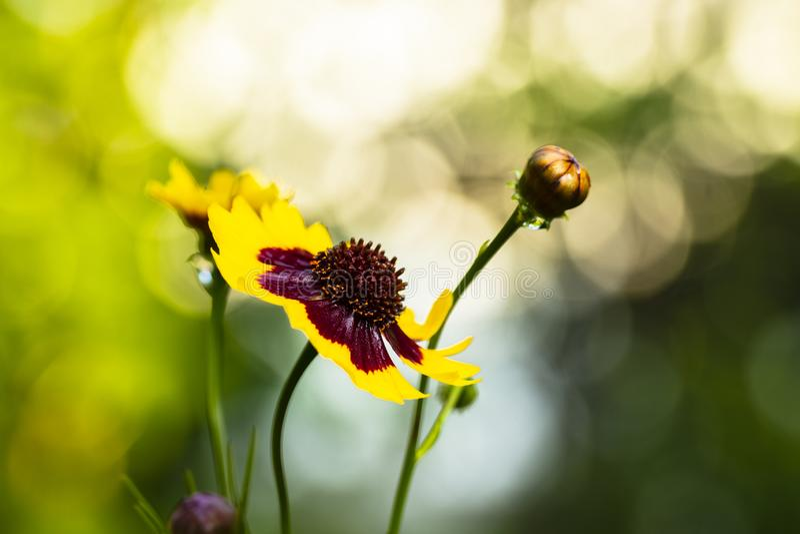 Gele Wildflower royalty-vrije stock afbeelding
