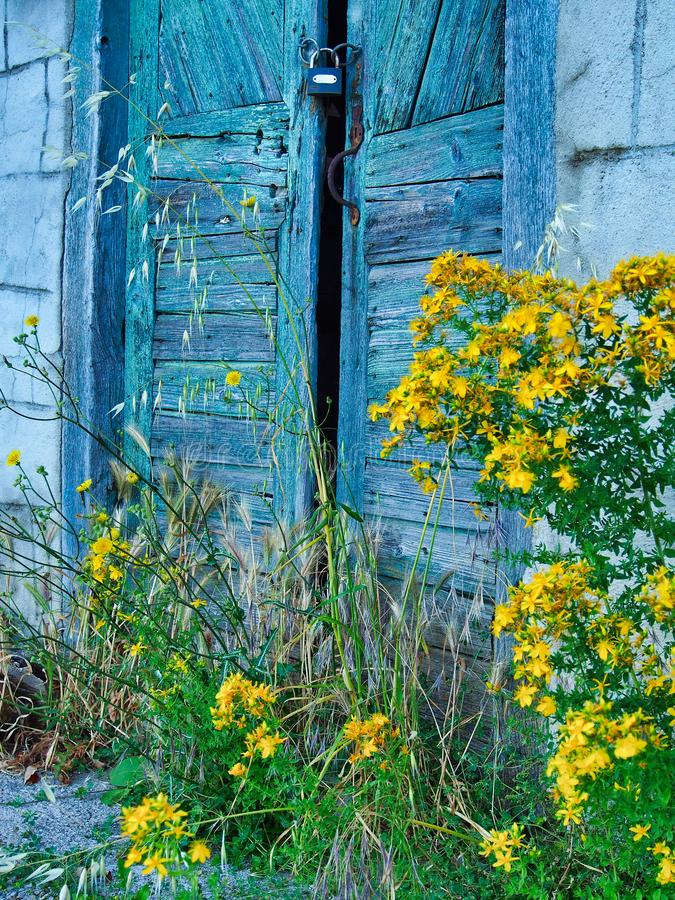 Gele Wildflowers en Oude Blauwe Houten Deur royalty-vrije stock foto