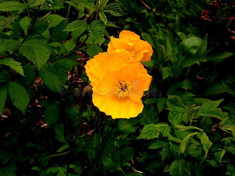 Gele zon en gele bloemen, groene bomen en bladeren stock foto's