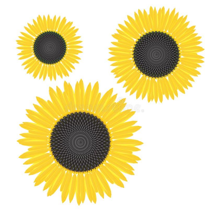 Gele zonnebloem met rijpe zaden en gele bloemblaadjes royalty-vrije illustratie