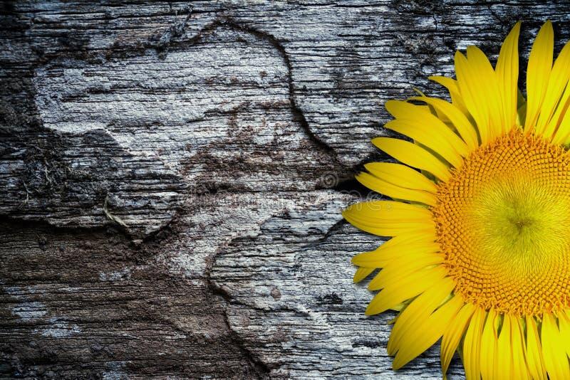 Gele zonnebloem op oude geweven houten vloerachtergrond royalty-vrije stock fotografie
